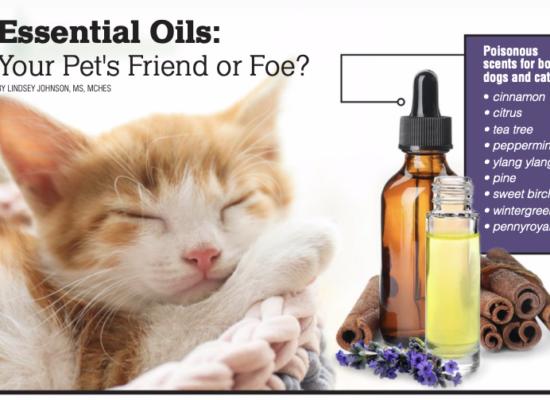 Essential Oils: Your Pet's Friend or Foe?